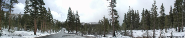 Winter Forrest Panorama